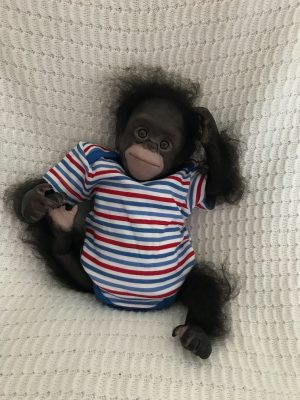 Reborn Chimpanzee Dolls